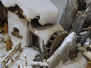 Krippenausstellung 2012 in Mauren