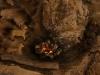 Krippen-Detailansicht-DSC02392